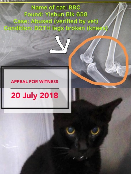 Another Yishun Cat Abuse: Poor Cat Will Never Walk Again - 100